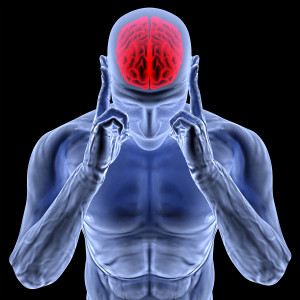 Aritchoke Extract reduced brain inflammation