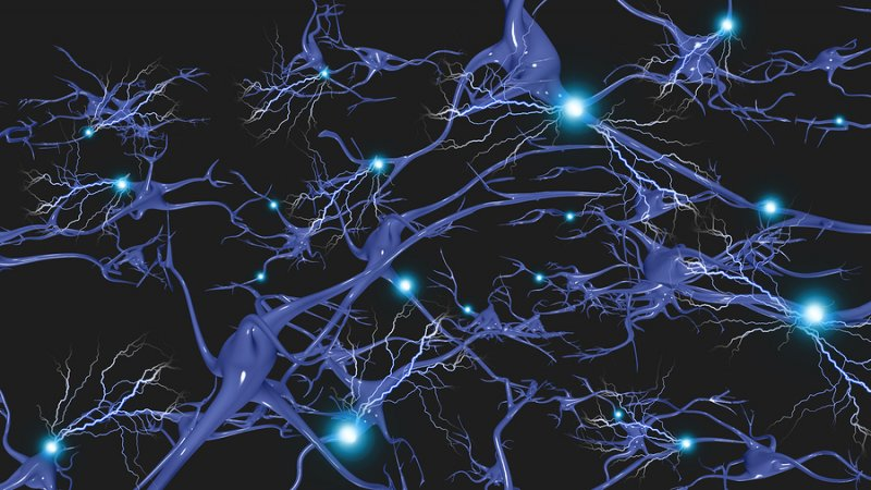 Alpha GPC increases neuron signalling