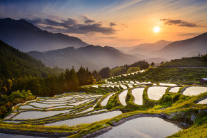 Japanese rice terraces at sunset