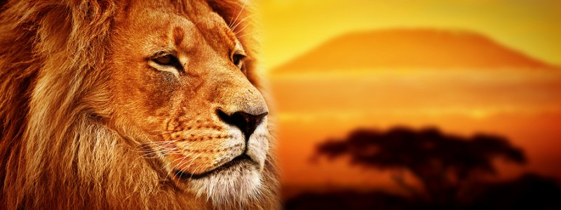 Lion's Mane boosts nerve growth factor in the brain