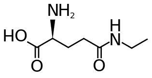 L-Theanine – Nootropics Expert