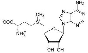 SAM-e (S-Adenosyl Methionine)