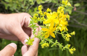 St. John's wort treats depression