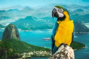 Brazil nootropics
