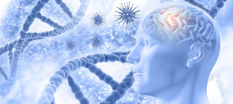 Uridine-Monophosphate-improves-memory