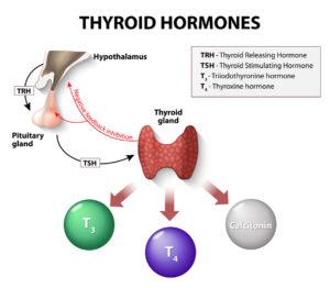 Iodine and Thyroid Hormones