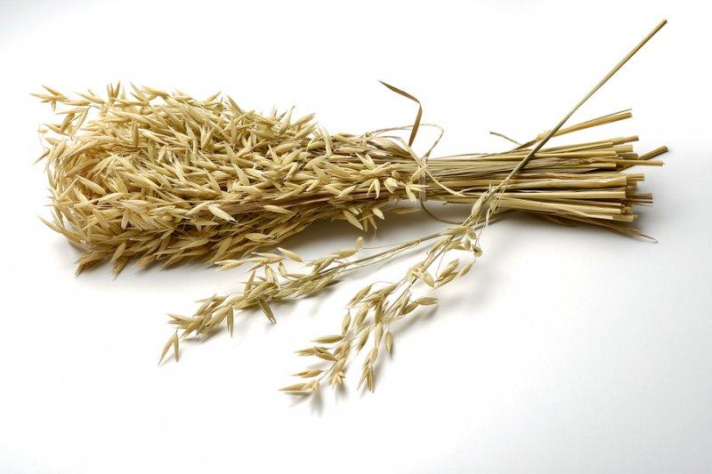 Oat Straw – Nootropics Expert