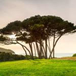 Pine Bark Extract – Pycnogenol