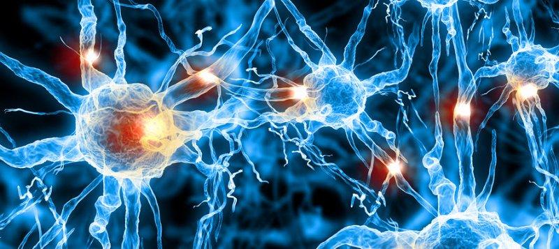 Pycnogenol-boosts-cerebral-blood-flow