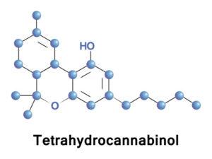 THC brain function