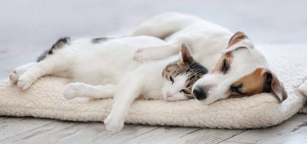 BioGenesis vitamins for sleep and anxiety