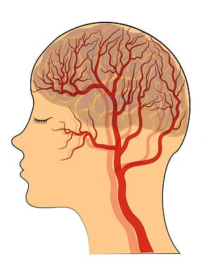 best supplements for the blood brain barrier